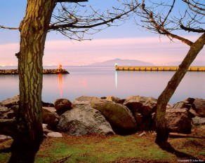 Breakwater and Trees